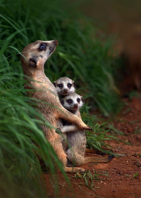 These Animal Families Posing In Pictures Will Make You