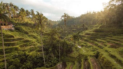 Tegalalang Rice Terraces Bali {The Ubud Rice Fields You'll