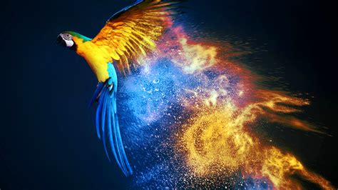 Macaw Wallpapers | Wallpapers HD