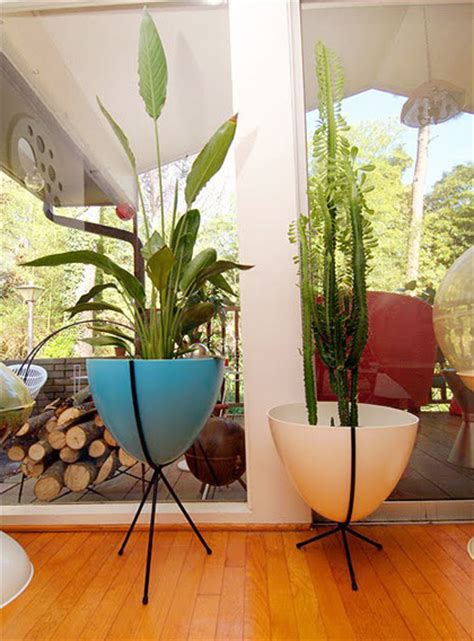 go modern with your plants! • Modern Charlotte, NC Homes