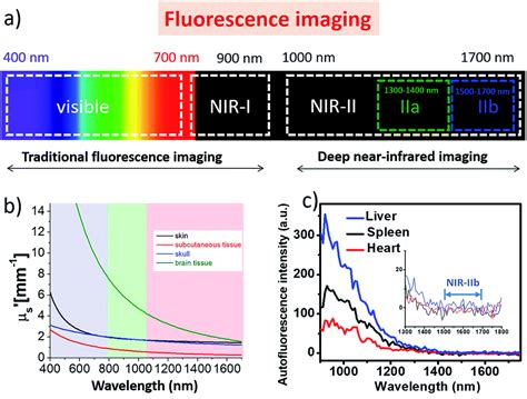 Recent advances in near-infrared II fluorophores for