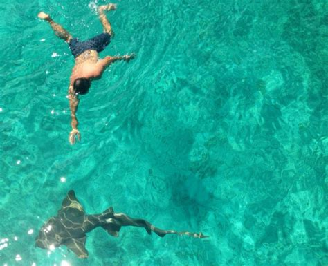 Nassau, Bahamas: Lunch with the sharks is a dream come